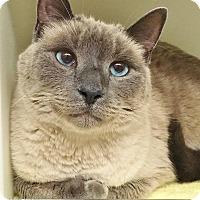 Adopt A Pet :: Moo - Salisbury, MA