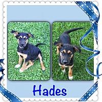 Adopt A Pet :: Hades - Genoa City, WI