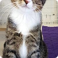 Adopt A Pet :: Sophie - Key Largo, FL