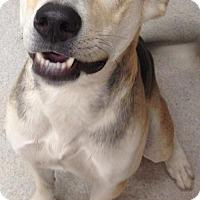 Adopt A Pet :: Roxy - Spokane, WA