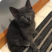 Adopt A Pet :: Charlotte - Jackson, NJ