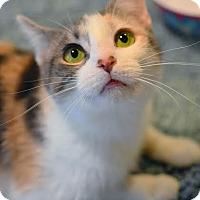 Adopt A Pet :: Yuna - Aiken, SC