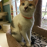 Adopt A Pet :: Patsy - Newburgh, IN