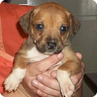 Adopt A Pet :: Foster Hero Needed for mom and nine pups - Gulfport, MS