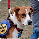 Adopt A Pet :: Ellis (Has Application)