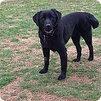 Adopt A Pet :: Jake Lee - Homewood, AL