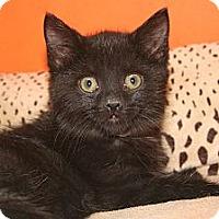 Adopt A Pet :: MARIAH - SILVER SPRING, MD