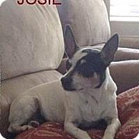 Adopt A Pet :: CaliJosie - Concord, CA