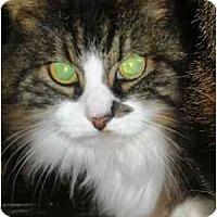 Adopt A Pet :: Fatima - Summerville, SC