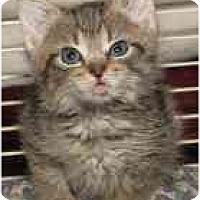 Adopt A Pet :: Gabriel - Arlington, VA