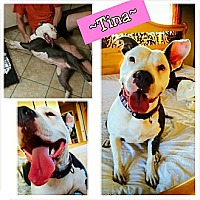 Adopt A Pet :: Tina - Calgary, AB