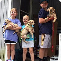Adopt A Pet :: Clayton and his sisters - Marlton, NJ