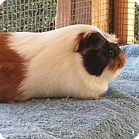 Adopt A Pet :: Mika - Fullerton, CA