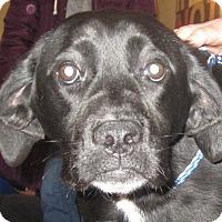 Adopt A Pet :: Kelly - Minneapolis, MN
