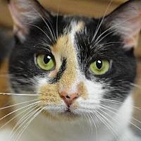 Adopt A Pet :: Cha Cha 13401 - Atlanta, GA