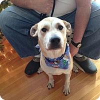 Adopt A Pet :: Ellie #493 AKA Gracie - Nixa, MO