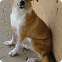 Adopt A Pet :: Makenzie - Bedford, TX