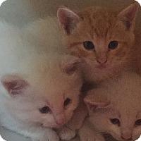 Adopt A Pet :: Milo - Encinitas, CA