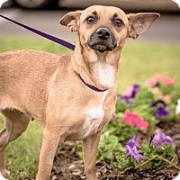 Adopt A Pet :: Liza - Gainesville, FL