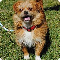Adopt A Pet :: Oscar - Berkeley Heights, NJ