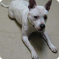 Adopt A Pet :: Layla - Gary, IN