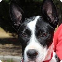 Adopt A Pet :: Heidi - Grants Pass, OR