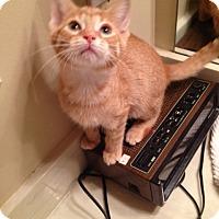 Adopt A Pet :: Crush - Hartland, MI