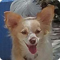 Adopt A Pet :: Lucille - San Marcos, CA