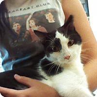 Adopt A Pet :: Mr. Donald - Stafford, VA