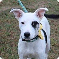 Adopt A Pet :: Sid - Pluckemin, NJ