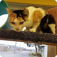 Adopt A Pet :: Glitter - Pittsburg, KS