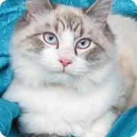 Adopt A Pet :: Simmie Joyride - Cuba, NY