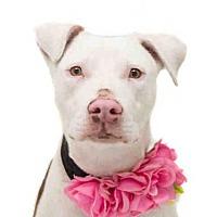 Adopt A Pet :: *COBALT - Orlando, FL