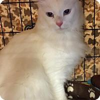 Adopt A Pet :: Prince Charming - Melbourne, FL
