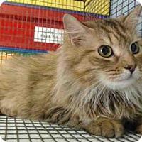 Adopt A Pet :: NALA - Corona, CA