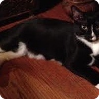 Adopt A Pet :: Tyler (DS) - Little Falls, NJ