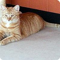 Adopt A Pet :: Rowdy - Tucson, AZ