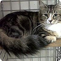 Adopt A Pet :: Harley - Mission, BC