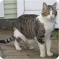 Adopt A Pet :: Mr. Peabody - Portland, OR