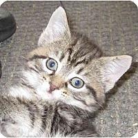Adopt A Pet :: Karina - Catasauqua, PA