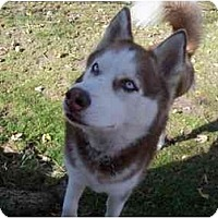 Adopt A Pet :: Tek--a tripod! - Belleville, MI