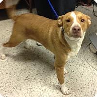 Adopt A Pet :: Abby - Hazard, KY