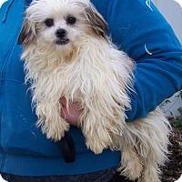 Adopt A Pet :: Beaker - Antioch, IL