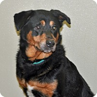 Adopt A Pet :: Otis - Port Washington, NY