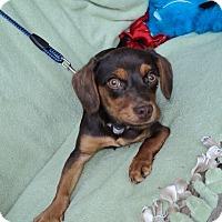 Adopt A Pet :: Maggie -sent to Viginia - Kannapolis, NC