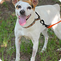 Adopt A Pet :: Laina - Conyers, GA