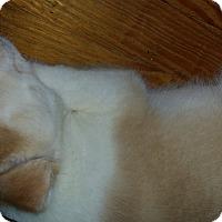 Adopt A Pet :: Jase - Mechanicsburg, PA