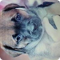 Adopt A Pet :: Froggy - Willingboro, NJ