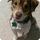 Adopt A Pet :: Tumblebug