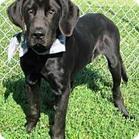 Adopt A Pet :: I'M ADOPTED Tonka - Oswego, IL